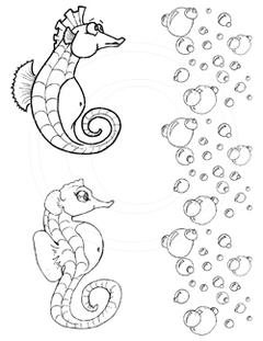 Seahorses and Bubbles